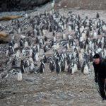 首度突破20℃!南極出現破紀錄高溫