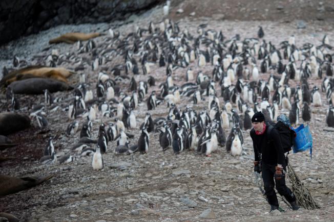 科學家13日在南極測得20.75℃的新高溫紀錄,這是南極洲氣溫有紀錄以來首度跨越攝氏20度門檻。圖為科學家1月31日在南極州雪島上收集垃圾。(路透)