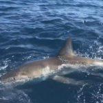 2019年鯊魚襲擊事件 佛州21起全球最多