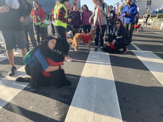 華埠爆竹跑活動第三年舉辦毛孩健行活動,不少主流社區民眾也與愛犬一同參與。(記者高梓原/攝影)