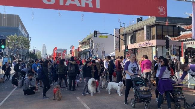 第42屆華埠爆竹跑活動15日照常舉辦,有200多位民眾參與毛孩健行活動。(記者高梓原/攝影)