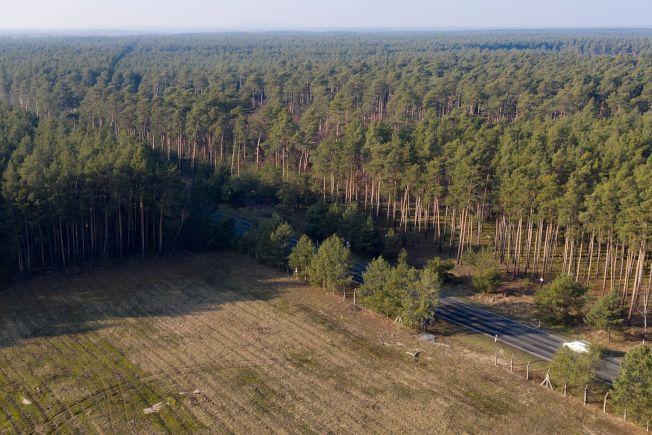 特斯拉為建廠整地目前已清掉該鎮約150個足球場大的森林面積。路透