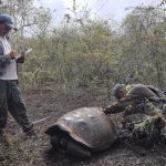 氣候變遷威脅動植物 50年後…恐1/3絕種