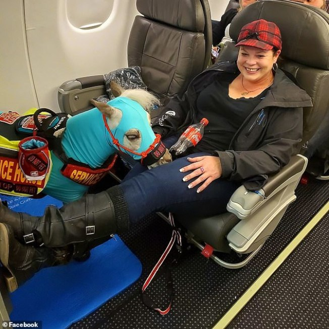 羅妮卡‧佛羅斯帶著迷你馬佛雷德一起搭乘國內班機。(照片取材自臉書)