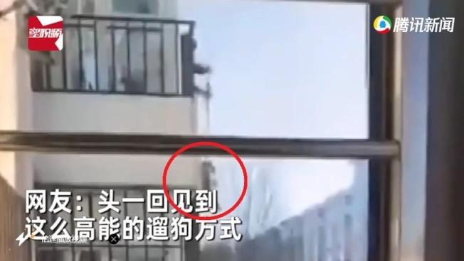 飼主因居家隔離不能外出遛狗,他用狗繩將狗狗垂吊上來。取材自騰訊新聞