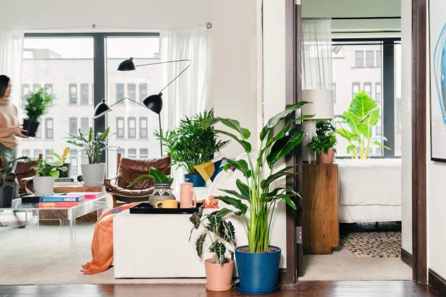 千禧世代喜歡看起來乾淨、現代,能與簡約家居相配的植物。(取自電商bloomscape)