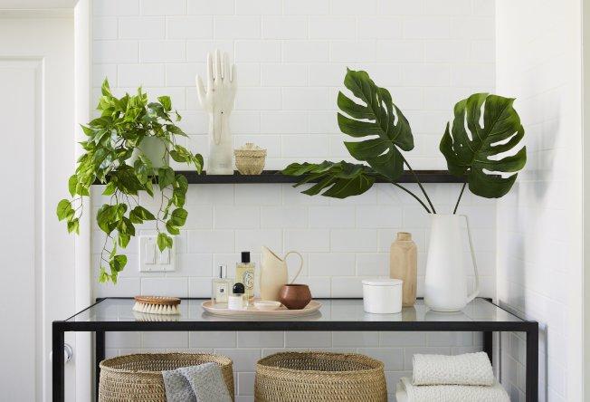 千禧世代喜歡看起來乾淨、現代,能與簡約家居相配的植物。(取自電商The Sill)