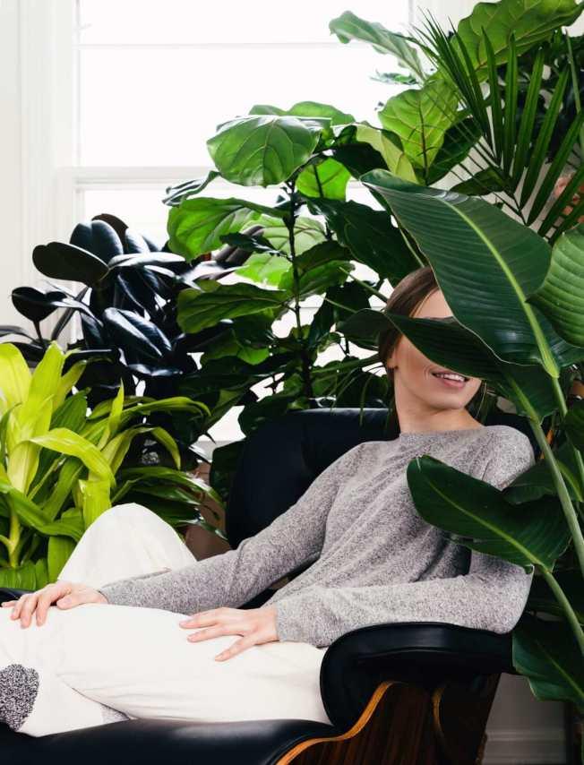 如今流行的網紅植物,大多是大葉片的熱帶植物。(取自電商bloomscape)