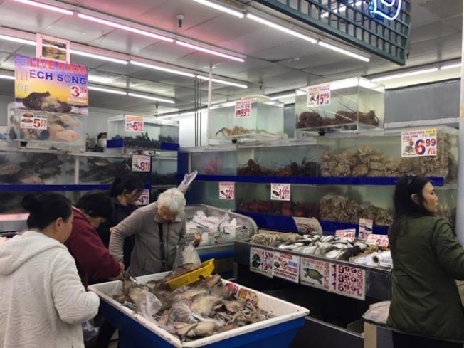 加州優質龍蝦出口中國受阻價格下降,但加州本地市場的龍蝦來源以波士頓海域為主,價格未見明顯影響。(記者楊青/攝影)