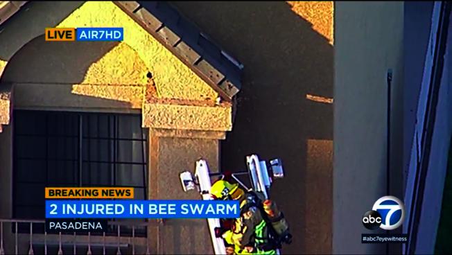 巴市忽然出現蜂群,蟄傷七人。(ABC電視截圖)