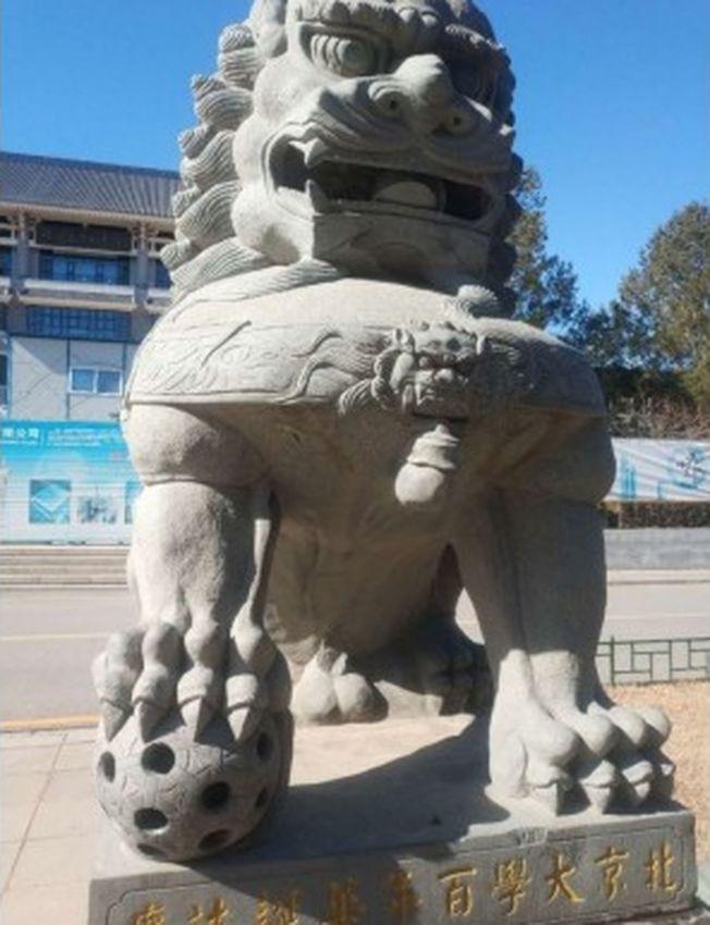 北京大學圖書館門外的石獅子的生殖器,近日被鑿斷了。(取材自微博)