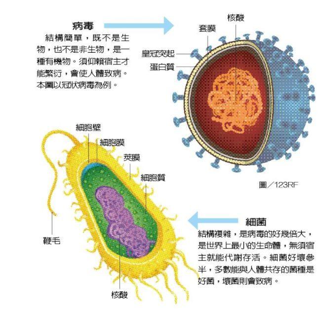 新冠病毒招惹不得 1張圖看專家分析它的前世今生