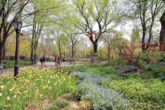 一具屍體被發現吊在中央公園樹上。圖/取自維基百科