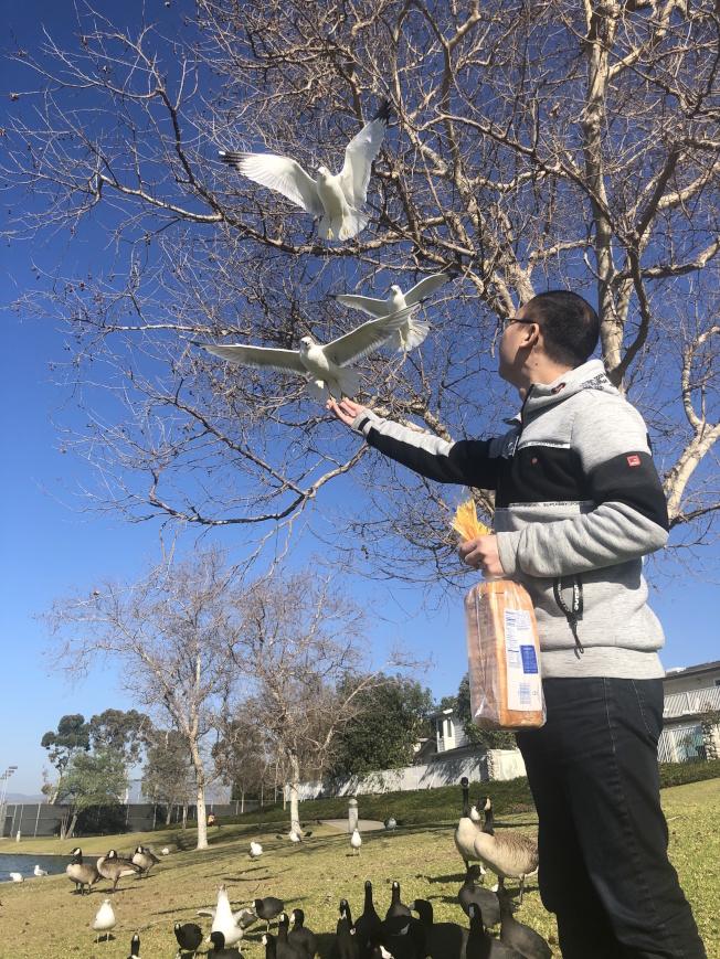 劉先生拿著超市最便宜的麵包餵鴿子,卻讓遠在武漢閉關的母親備感羨慕和無奈。(劉先生提供)