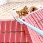 鄰居封城回不了家 她幫餵狗20天…才知被「騙吃騙喝」