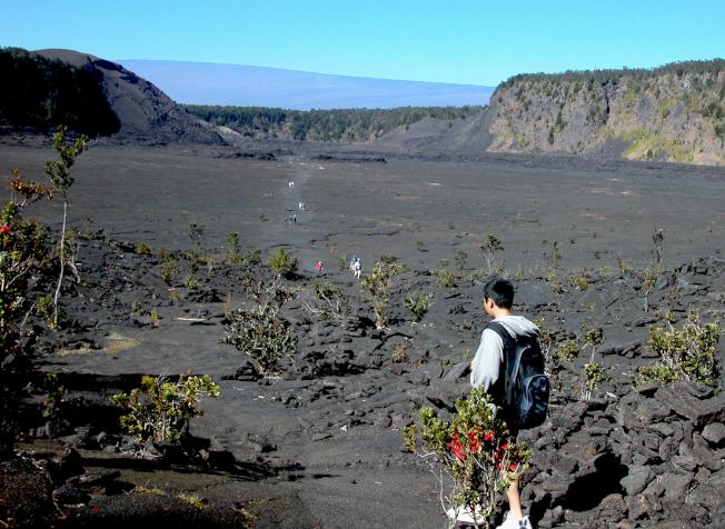 走進大島Kilauea Iki火山口,熱煙猶存,植物已經見縫生長。