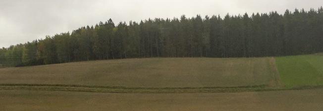 北歐森林。(圖:作者提供)