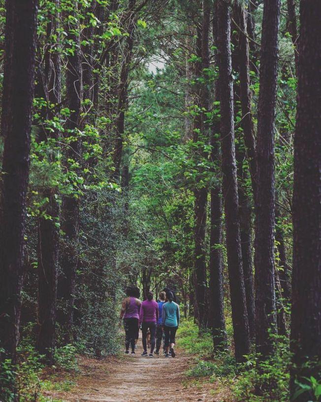公園健行步道蜿蜒於茂密林木中。(市府臉書)