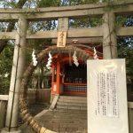 隔了143年!日本八坂神社緊急祭出「茅之輪」 祈求疫情退散