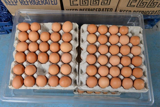 蛋價近來一路飆漲,3月14日周末期間的蛋價比一年之前同期價格,足足貴了44%。(Getty Images)