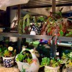 賭城居民宅在家 蒔花、種菜、包水餃