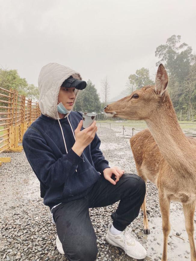 張洛偍到斑比山丘體驗被鹿群圍堵搶食的快感。(圖:周子娛樂提供)