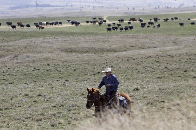 偏遠鄉村擁有天然社交距離與隔離的條件,可望幫助減緩新冠病毒傳播。圖為俄勒岡州民眾懷特瑟爾騎馬牧牛。(美聯社)