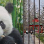 「動物都在想念遊客」 德國動物園請梅克爾撥款餵食