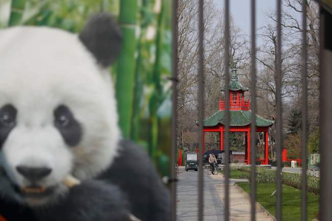 圖為柏林動物園的熊貓。(Getty Images)