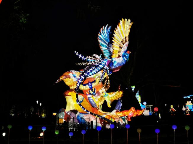 台灣特產的藍色帝雉,是燈會主題之一。(圖:作者提供)