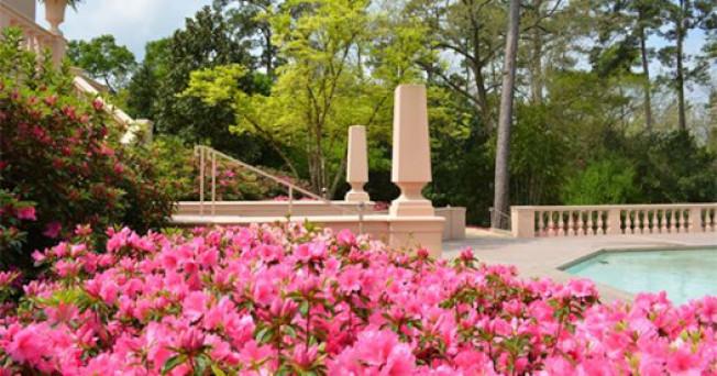 河橡花園俱樂部的「杜鵑花道」(Azalea Trail)迎春活動,為地方盛事。( 休士頓藝術博物館網頁)