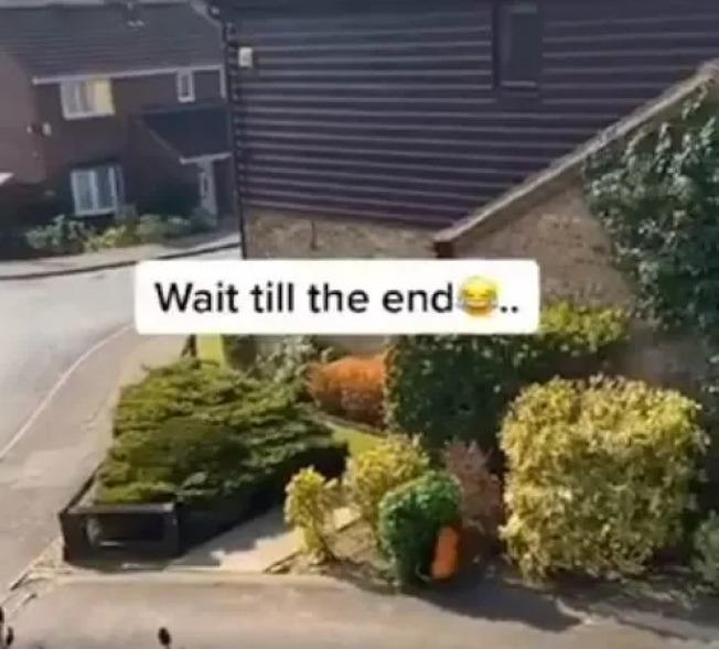 英國人為了出門,打扮成跟街邊一樣的綠色灌木,躲在路邊很難察覺有異樣。(取材自推特)