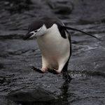最高溫9.2℃!南極首見熱浪 「生態將巨變」