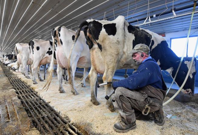 養牛過多不利於控制溫室效應。(Getty Images)