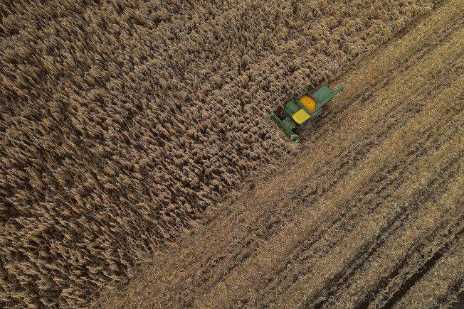 汽油、乙醇疲软 玉米跌近4年新低