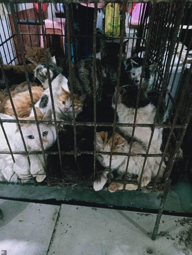桂林某市場上,等著被宰殺的貓 。(取材自每日郵報)