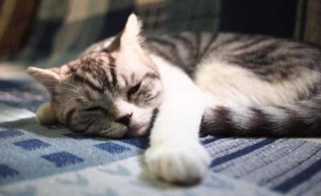 中國一項研究指出,武漢的貓群可能被人類傳染新冠病毒。(取材自澎湃新聞)