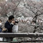 日本將宣布緊急狀態 賞櫻染疫?東京連2日增百例