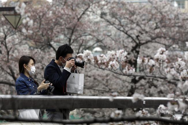 戴著口罩的東京民眾5日在上野恩賜公園賞櫻。東京過去兩天新冠肺炎單日確診病例連創新高,官員認為可能和兩周前的賞櫻人潮有關。(美聯社)