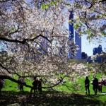 紐約市恐將新冠死者暫埋公園? 議員推特發文遭打臉