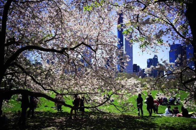民代稱紐約市可能將新冠死者暫時掩埋在公園中。(本報檔案照)