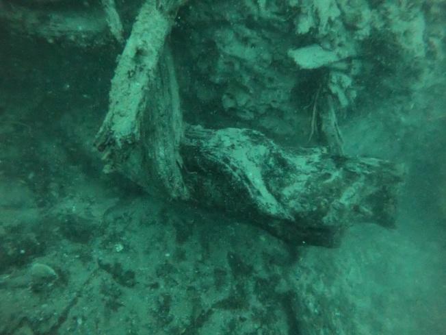 美國阿拉巴馬州莫比爾灣水下約18.3公尺處,藏著一處已有6萬年歷史的上古森林遺跡,直到2004年才重現光明。水下探險隊帶回一段木頭,研究生活於其中的船蠹,希望從中找到開發救命新藥的秘密。取材自NOAA