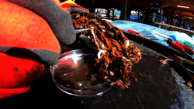 探險隊採集到的古木因為被沉積物覆蓋,就像被鎖住6萬年,保存狀況非常完好,還能見到表面樹皮和內在顏色。科學家從船蠹中發現新品種細菌,其中12個菌種正進行DNA定序,以評估能否用於製作新藥,目前至少已找出一種抗生素。NOAA