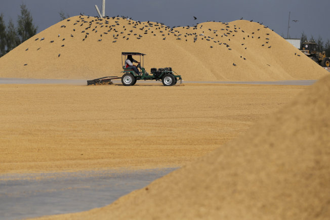 新冠肺炎疫情擴散,引發稻米進口國爭相囤積以及出口國限制出貨,推升國際米價漲至七年高點。路透