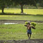亞洲各國囤儲限制出口 稻米價格創7年新高 小麥同步漲價