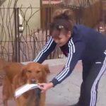 鄰居被隔離 狗郵差幫忙送食物上門