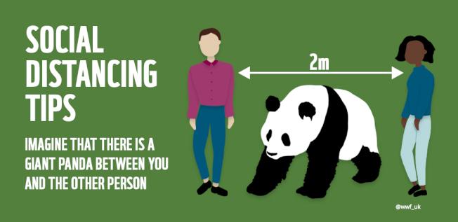 世界自然基金會(WWF )日本分會告訴大家至少要維持「一隻熊貓」的社交距離。(取材自推特)