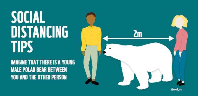世界自然基金會(WWF )日本分會告訴大家至少要維持「一隻北極熊」的社交距離。(取材自推特)