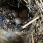 華人宅家隔離一個月 門上 「長出鳥巢」
