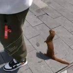 武漢解封 黃鼠狼上街討飯